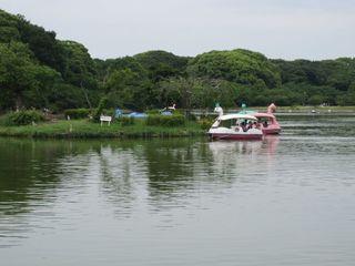 明石公園湖 (800x600).jpg