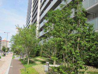 プラウドシティ新大阪 緑地 (800x600).jpg