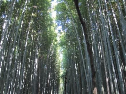 竹林 (480x360)