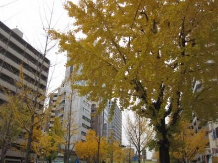 街路樹 (480x360)