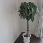 リビング「緑」のススメ。観葉植物などを用いて快適生活!