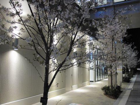 ズットシティ桜 (480x360)